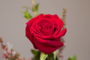 Forever Young roses at Butera The Florist